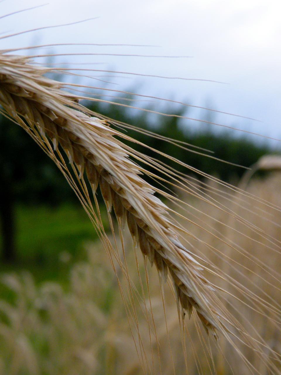 Agrarexperten: Strengere Düngegesetze für Klimaschutz