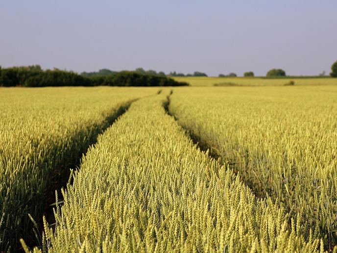 Weltklimarat: Sonderbericht zu Landnutzung und Klimawandel
