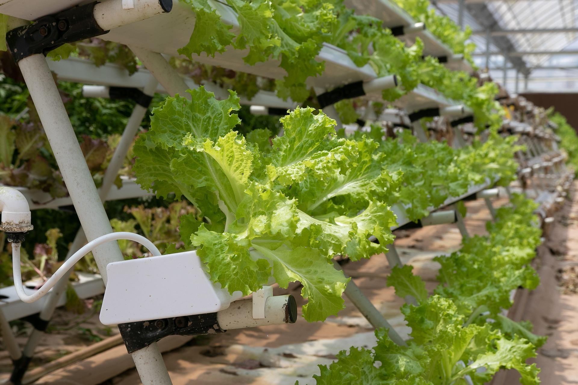 """""""Future-Food""""-Sommerakademie 2020 des IWE"""